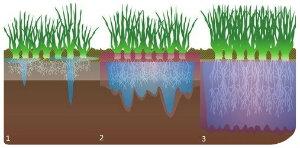 DU Example of root watering